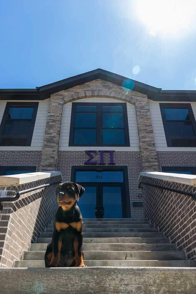 Sigma Pi Alpha Iota Chapter front steps dog